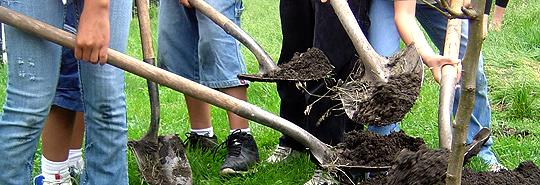 PlantingShovels