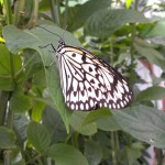 15 Things you probably don't know about the Butterfly Pavillion!!