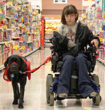 service.dog.wheelchair